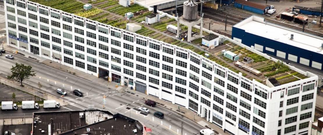 Brooklyn Grange: Intensive Rooftop Farming