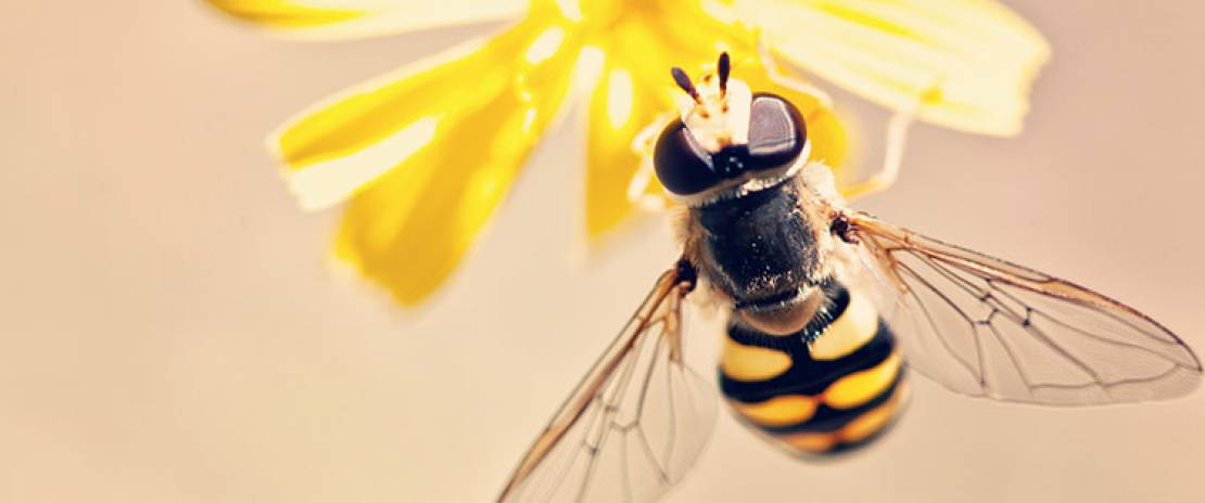 How to Build a Bee-Friendly Garden at Home